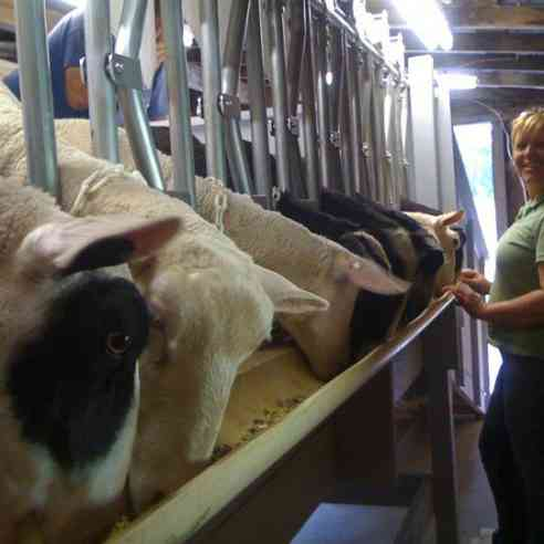 Here's Kerry in the Black Oaks Sheep dairy milking parlor during that 1st season in 2010