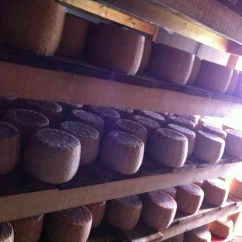 wheels of Fat Bottom Girl cheese on wood aging shelves