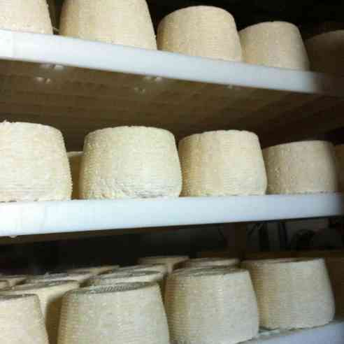 freshly unmoulded wheels of Fat Bottom Girl spend a few days on draining racks