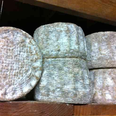 hepherdista cheese in the aging room